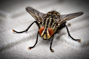 Insect Control, Pest Control in Orpington, Chelsfield, Downe, BR6. Call Now 020 8166 9746