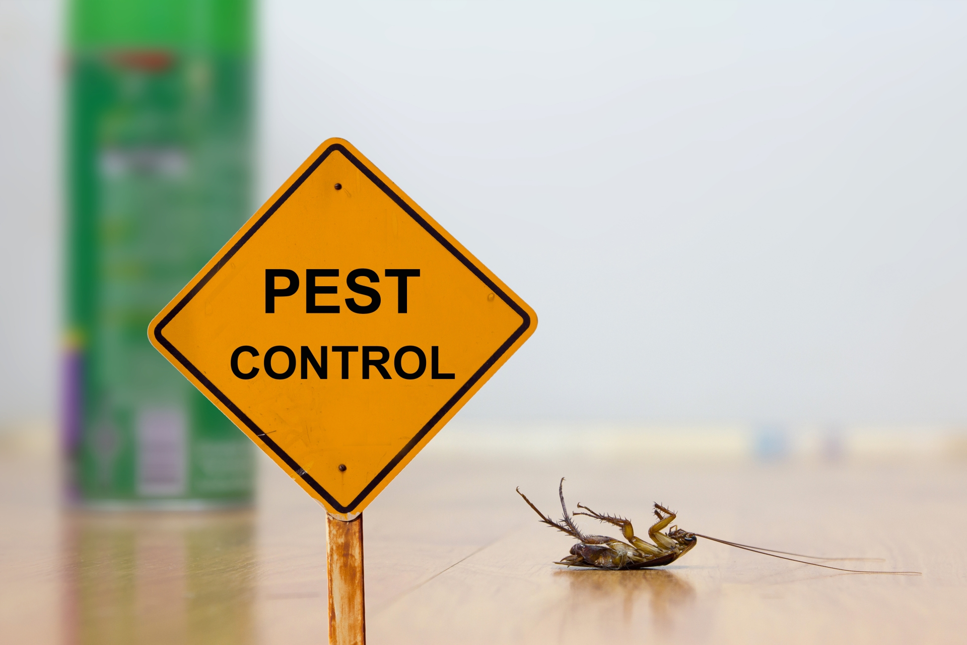 24 Hour Pest Control, Pest Control in Orpington, Chelsfield, Downe, BR6. Call Now 020 8166 9746